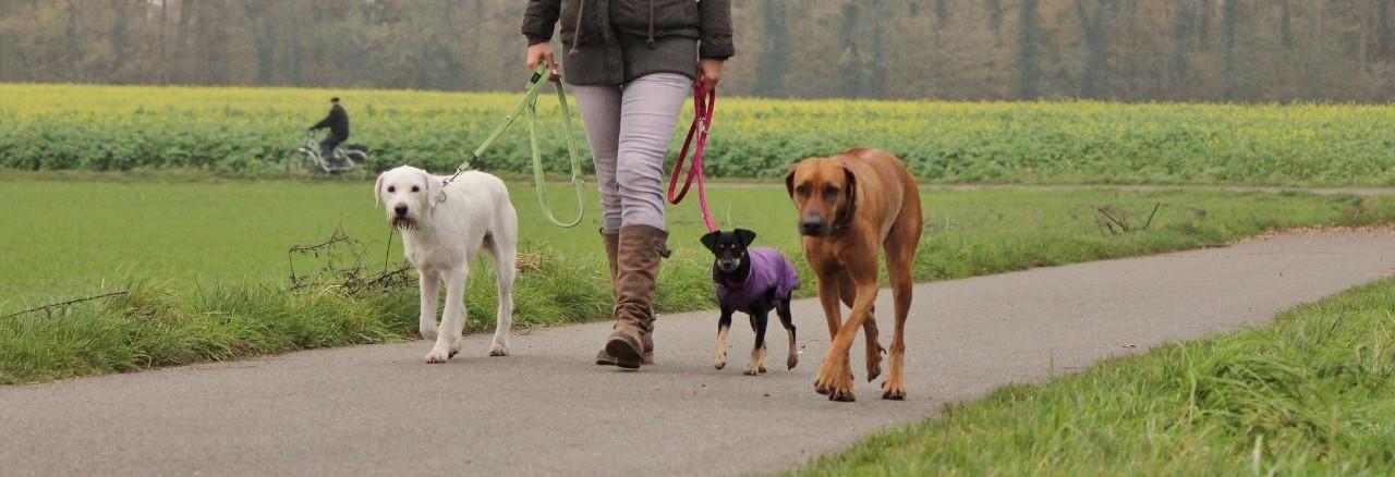 Romy Schmidt - Hundefairhalten